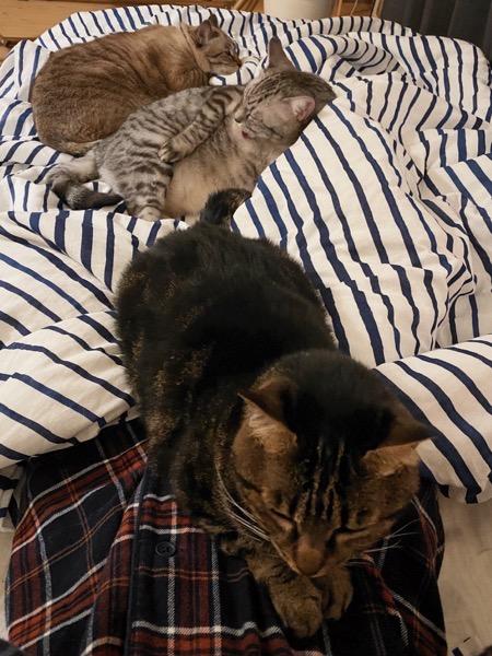 ふとんの上でそれぞれくつろぐ猫たち。