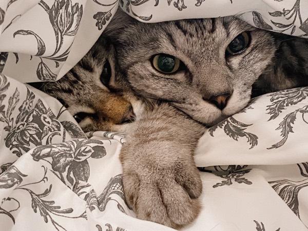 ふとんをめくると猫が出てきた。