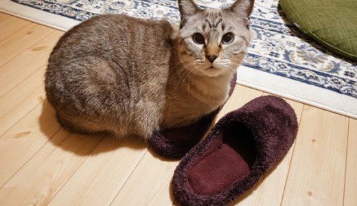 ユニクロのルームシューズを愛してやまない猫