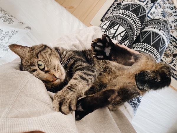 真剣な目で甘える猫。