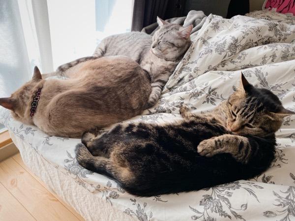 ベッドの上でくつろいでる猫たち。
