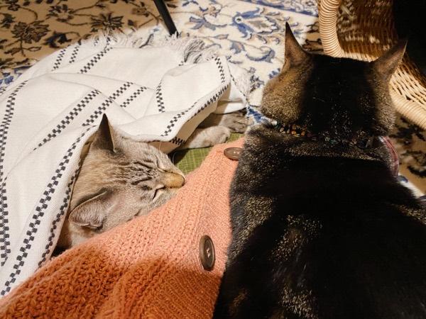 まったりしてる猫たち。