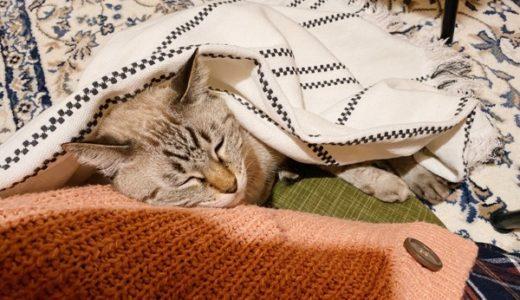 猫がいると地べた生活がやめられない