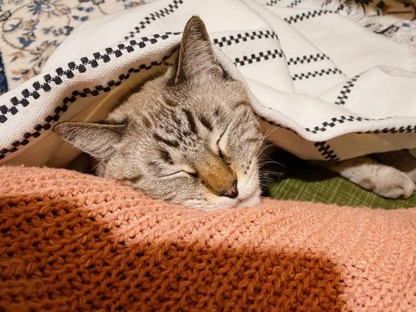 猫の寝顔。