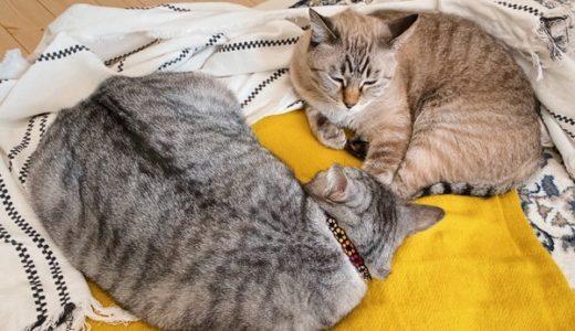 猫「ここ、なんだかあったかいな〜」