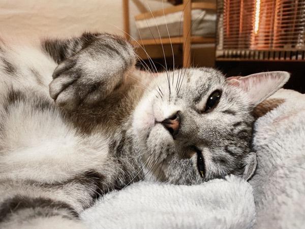 うっとり顔の猫。