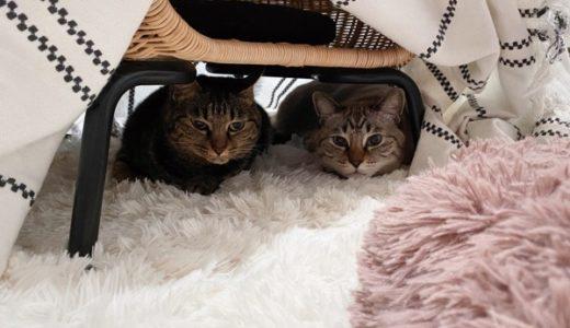 ホットカーペットと布で猫用コタツもどきを作ったら