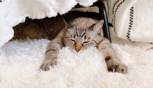 ホットカーペットの上で前脚を広げて寝ている猫。