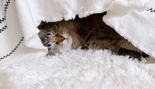 コタツで寝落ちしてる猫がかわいすぎる