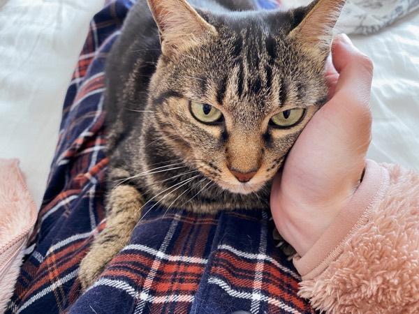 ニンゲンの手に顔を擦り付けて甘える猫。