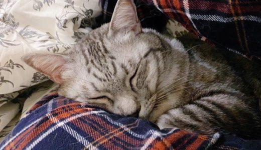 きっとデカい枕か何かだと思っている