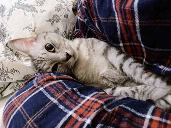 ぶりっこ攻撃してくる猫。