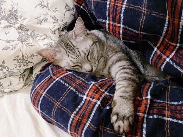 ニンゲンの太ももを抱き枕にしてる。