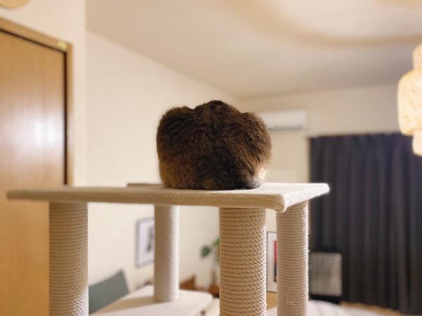 山型食パンのような猫のお尻。