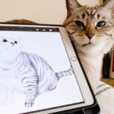 iPadと猫。