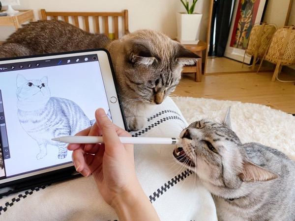 Apple Pencilに噛み付く猫。
