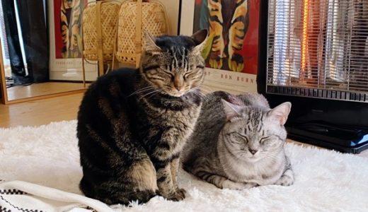 ヒーターの前でじっとしてる年長組の猫たち。