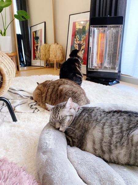 猫たちの日常の一コマ。