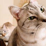 首を傾げる猫2匹。
