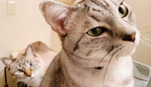 ドライヤーを観察している猫たち