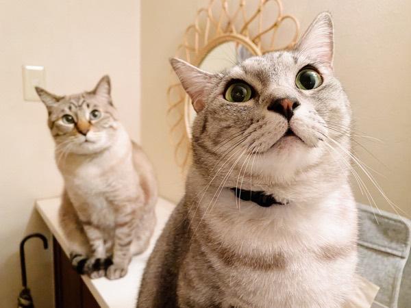 目をまん丸にしてる猫2匹。