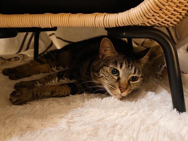 テーブルの下でひとりでくつろいでるジーナちゃん。