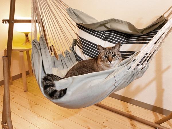 ハンモックに乗ってる猫。