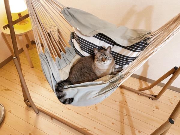 人間用のハンモックを乗りこなす猫。