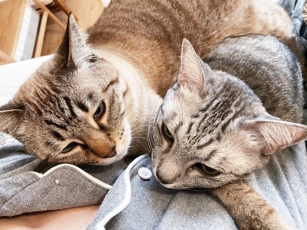 ニンゲンに抱きつく猫たち。