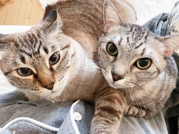 こっちを見つめるイケメン猫たち。