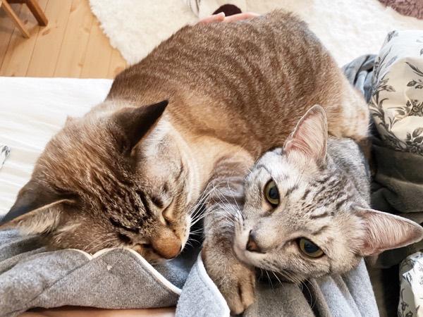 ニンゲンに甘える猫たち。