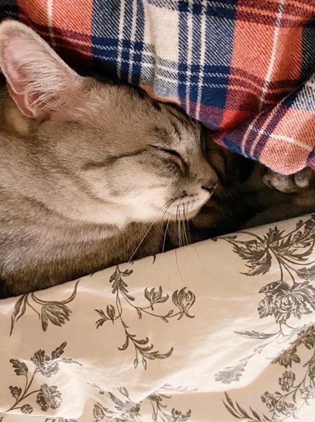 ニンゲンの腕枕でスヤスヤ眠る猫。