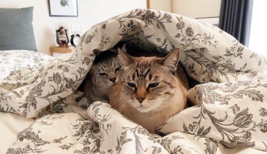 寒がり猫の暖の取り方