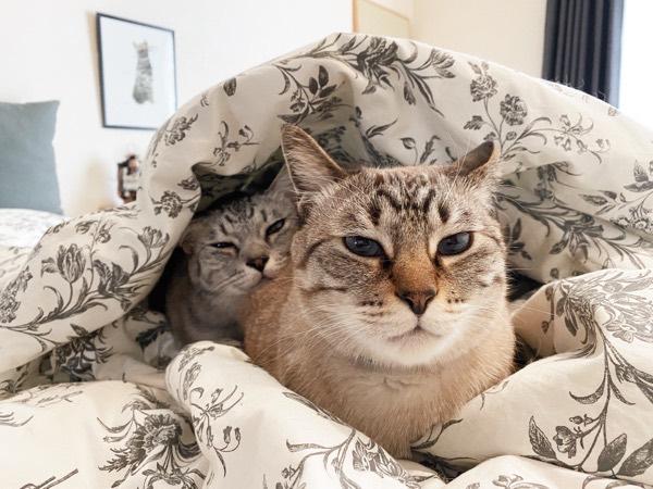 ムーちゃんのお尻で暖をとるテトちゃん。
