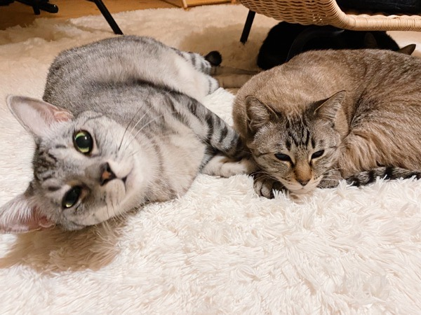 寝転びながらこっちを見ている猫。