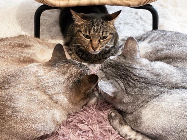 猫の後頭部×2。