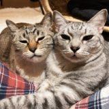 眠そうな顔の兄弟猫。