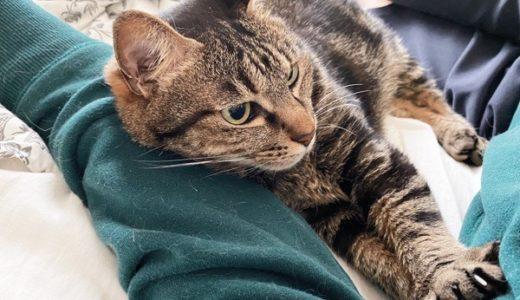 ニンゲンと添い寝する猫。
