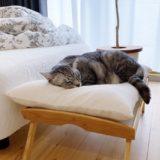 木製トレイで作ったベッドで眠る猫。