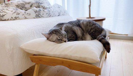初夏の候、猫たちのそれぞれの寝床