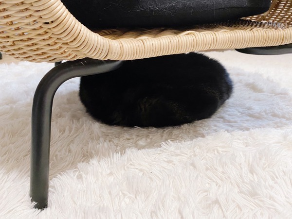 黒い塊はジーナちゃん。