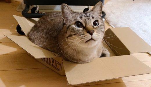 壊れたダンボール箱をいつまでも大事そうに使う猫