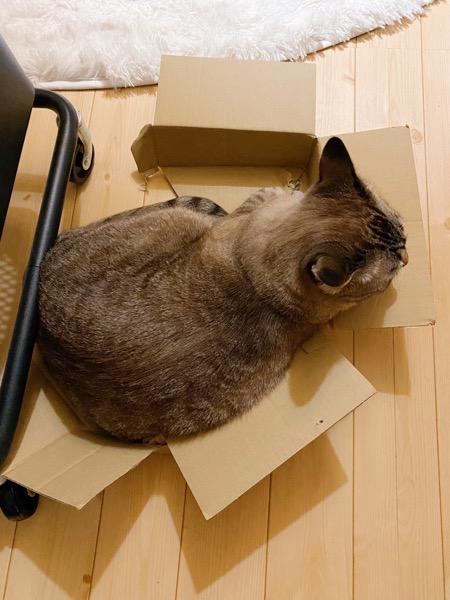 箱からお尻がはみ出てる。