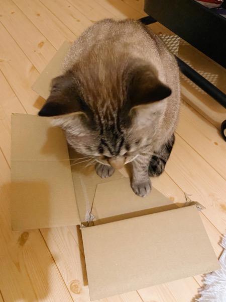 破けて箱の形じゃなくなったダンボールと猫。