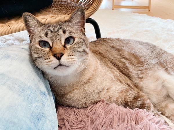 ニンゲンの脚にもたれてくつろぐ猫。