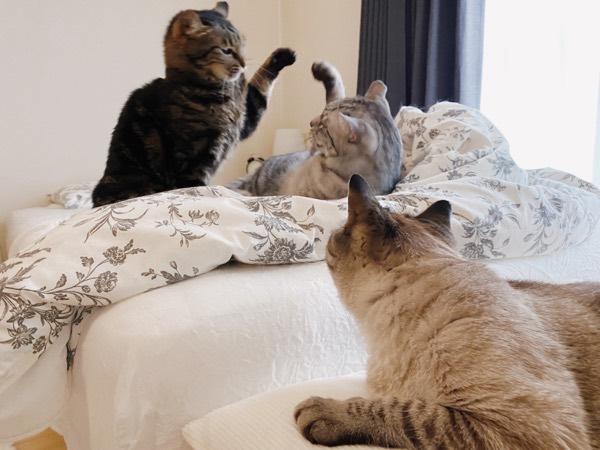 突然ケンカし始めたジーナちゃんとテトちゃん。
