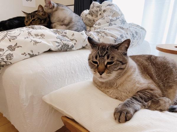 ムーちゃんは蚊帳の外。