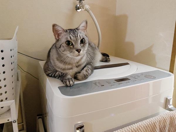 洗濯機の上で寛ぐ猫。