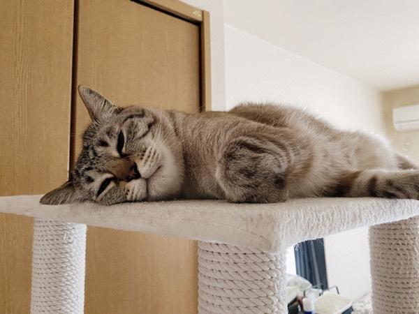 眠そうな顔の猫。