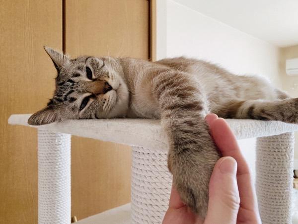 猫と握手。